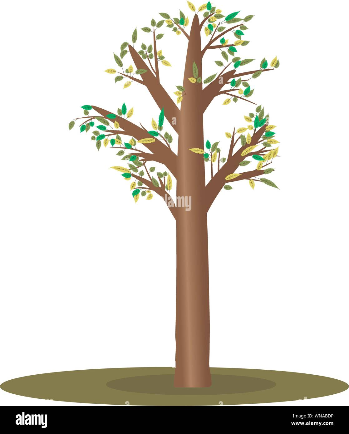 Isolated Cartoon Tree With Small Leaves Vector Illustration For Cartoon Props And Decoration For Anomations Stock Vector Image Art Alamy Cartoon tree cartoon tree drawing cartoon treehouse cartoon tree roots cartoon tree frog green cartoon tree cartoon tree with no leaves. https www alamy com isolated cartoon tree with small leaves vector illustration for cartoon props and decoration for anomations image271291826 html