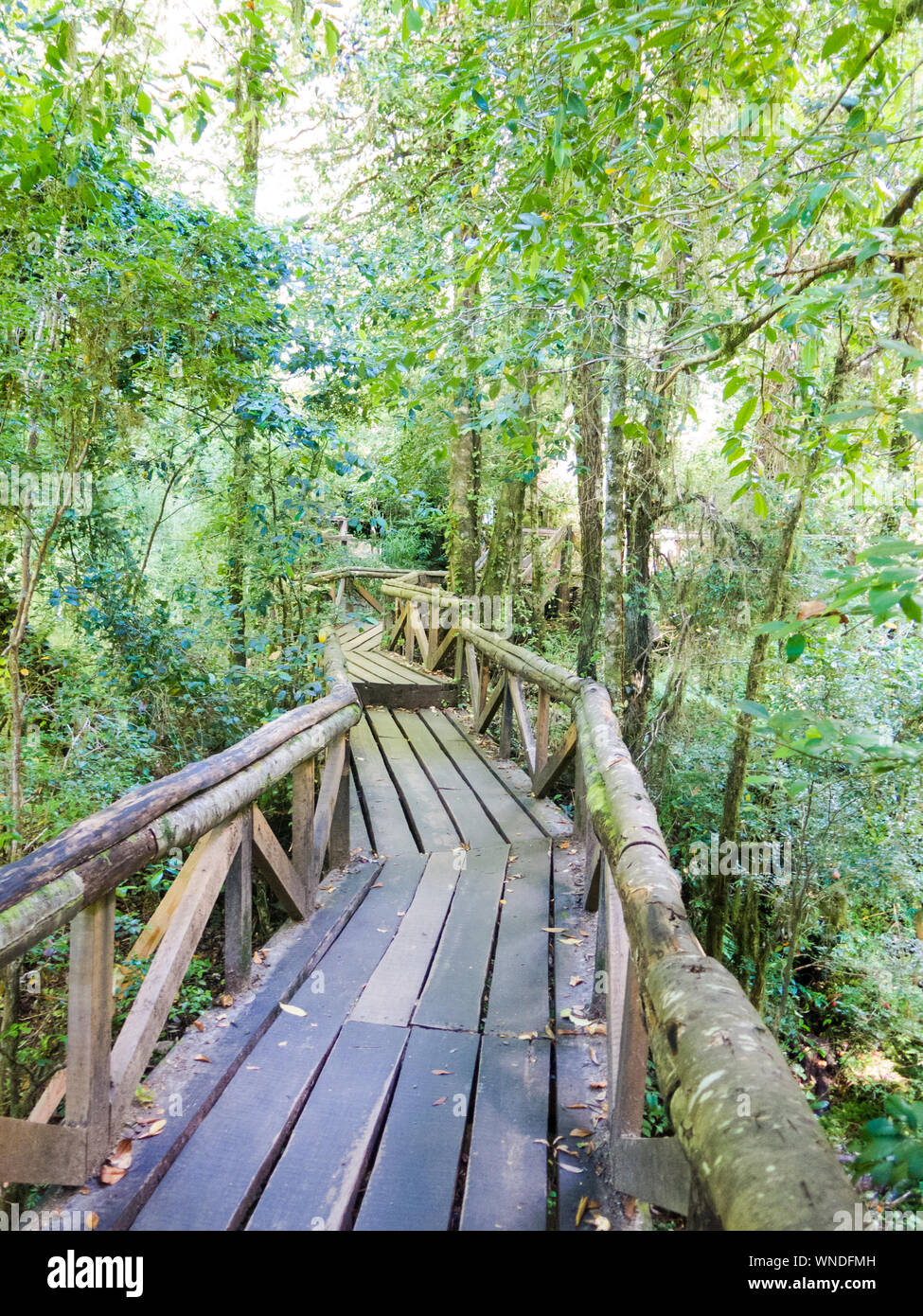Wooden walkway in Huilo Huilo Biological Reserve, Los Rios Region, Chile. Stock Photo