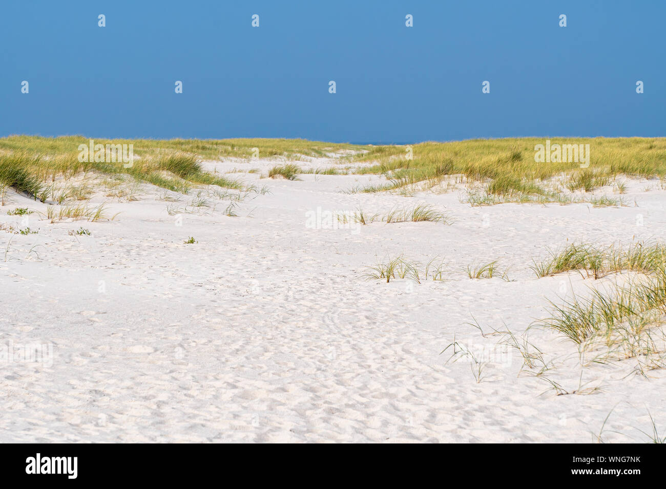 Dunes On The Island Sylt Germany Stock Photo 271420623 Alamy