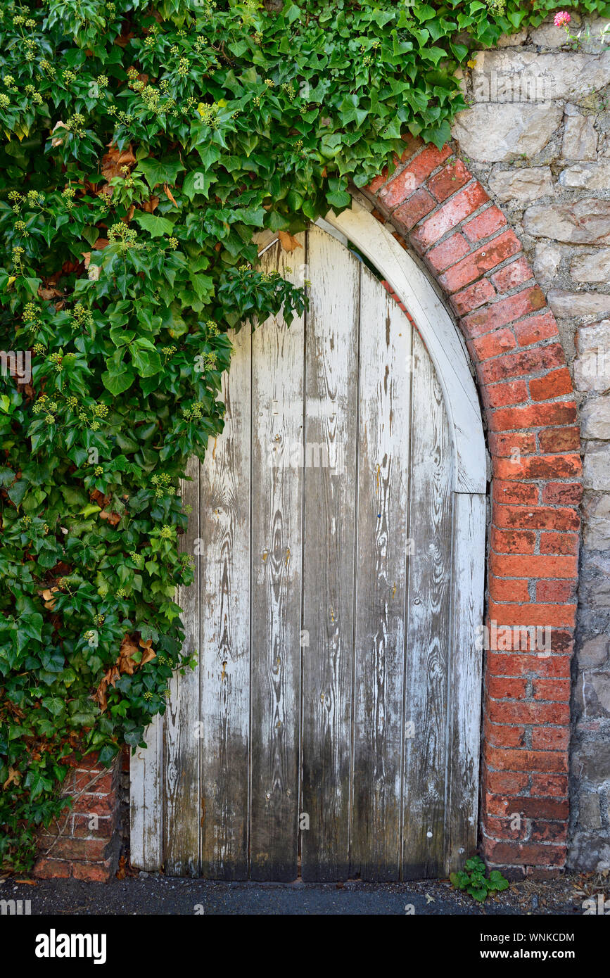 Old arched wooden door with flacking white paint, ivy and brick Stock Photo