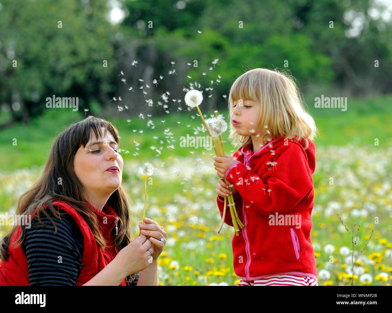Mother And Daughter Playing With Dandelions At Park Stock Photo