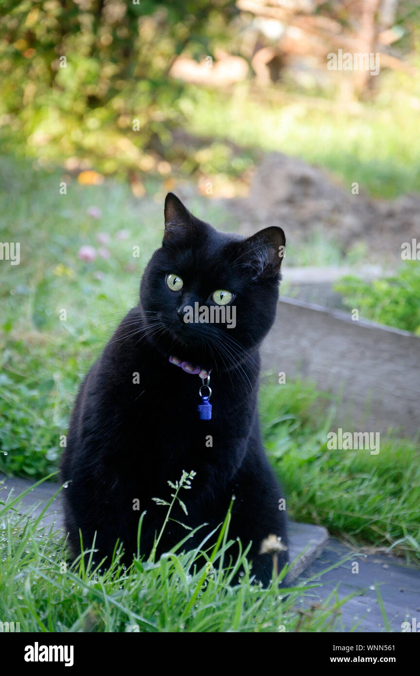Beautiful Black Cat With Pet Medallion In The Garden Stock Photo Alamy