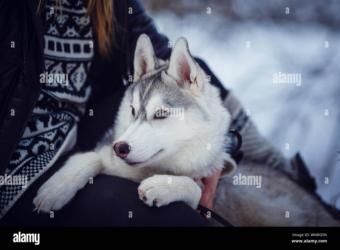 Female Hiker With Siberian Husky Dogs In Mountains Looking At Beautiful View Stock Photo Alamy