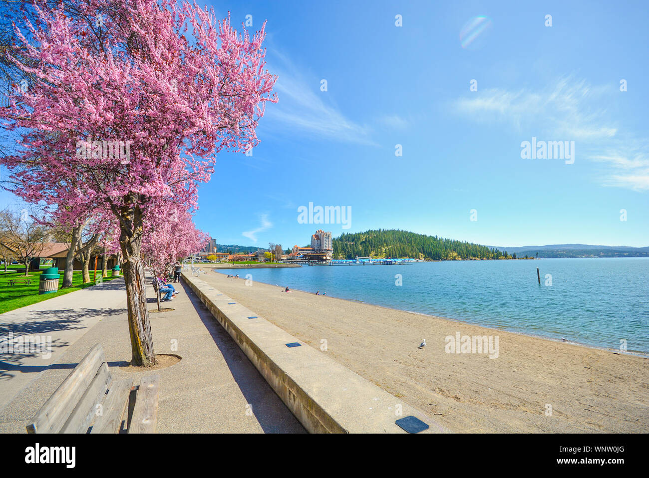Colorful trees blossoming in the Spring along the sandy shores of Lake Coeur d'Alene in Coeur d'Alene, Idaho. Stock Photo