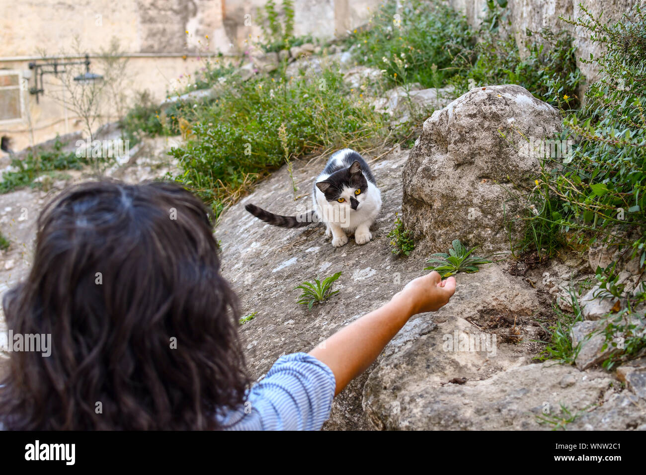 A woman coaxes a black and white stray cat with dry food in her hand in the medieval city of Matera, Italy Stock Photo