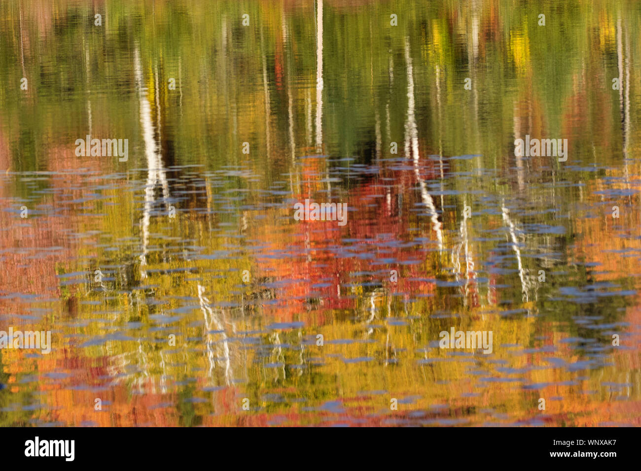 Colorful Fall Foliage Reflects In The Ponds In New England