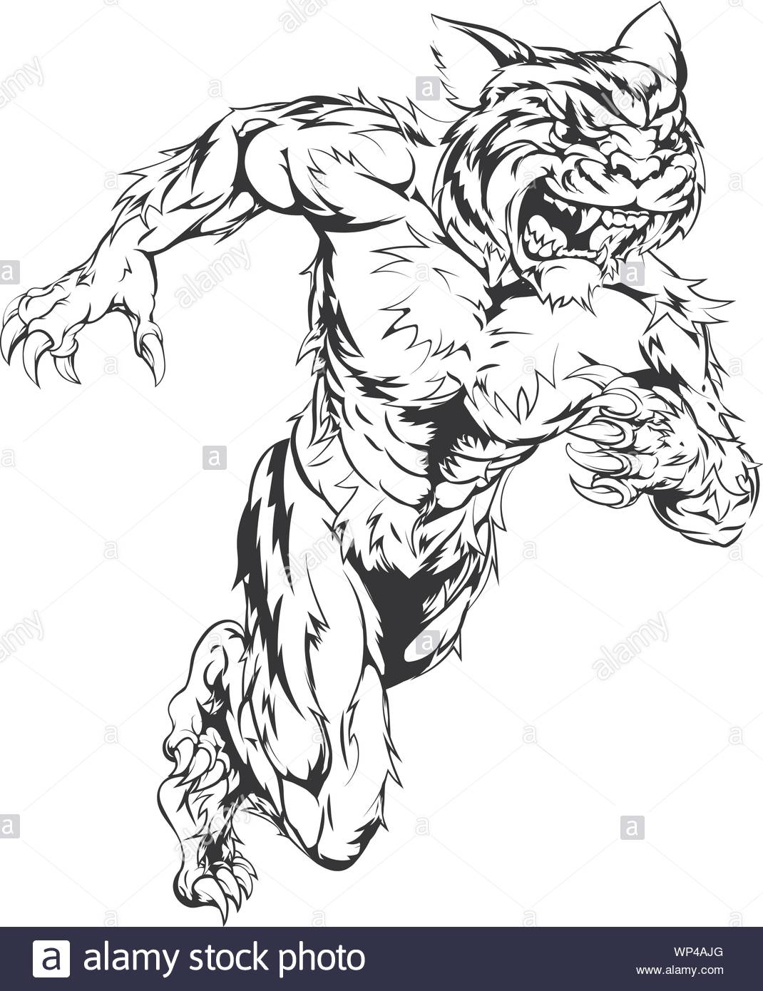 Uomo Tigre Da Colorare.Tiger Running Vector High Resolution Stock Photography And Images Alamy