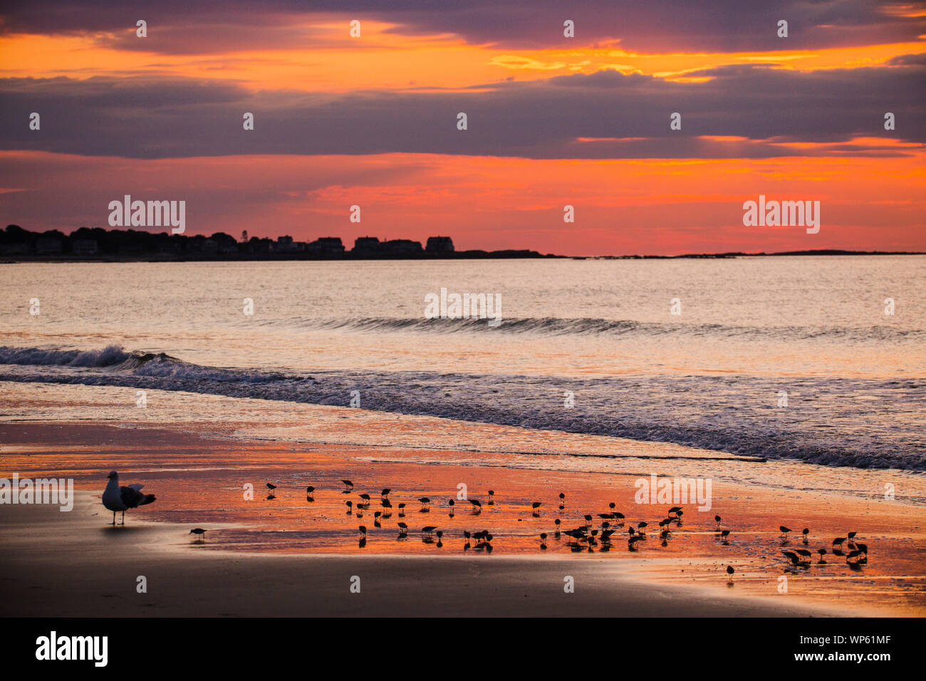 Page 3 Birds Of Maine High Resolution Stock Photography And Images Alamy