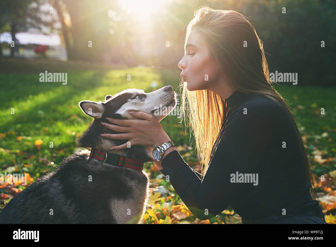 Young beautiful girl playing with her cute husky dog pet in autumn park covered with red and yellow fallen leaves Stock Photo