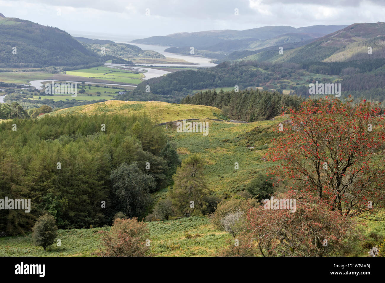 A view of the Mawddach Estuary from the Precipice Walk, Snowdonia National Park, North Wales, UK Stock Photo