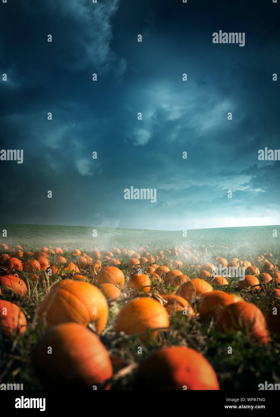 A spooky and misty halloween pumpkin field landscape