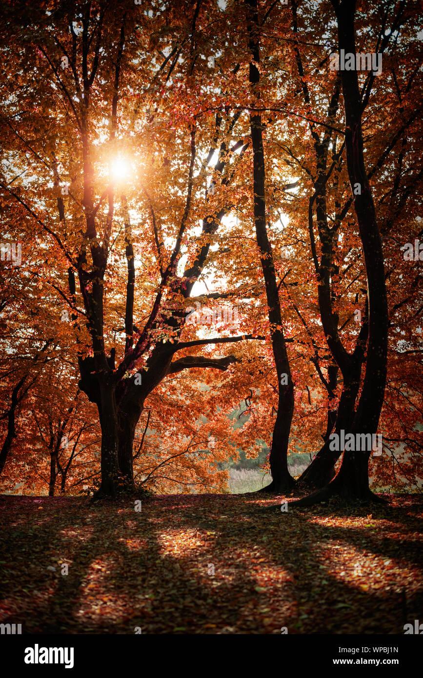 Autumn forest landscape. Stock Photo