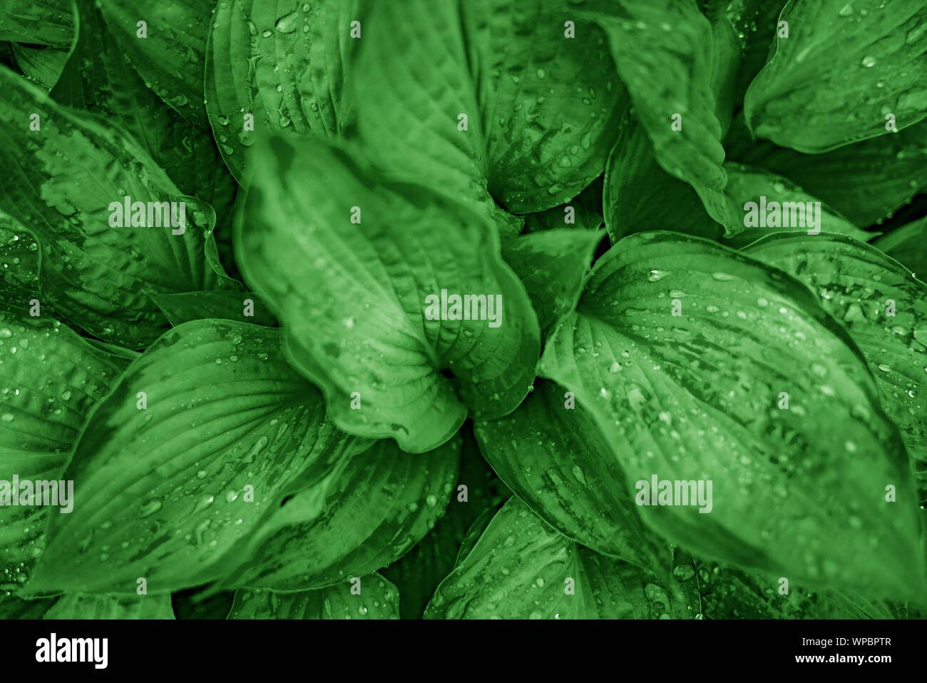 Green plants with dew drops. Stock Photo