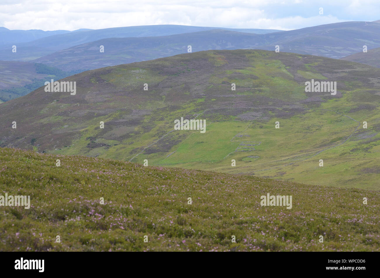 Moorland along the Sgor Buidhe trek near Ballater, Cairngorm mountains, Scotland Stock Photo