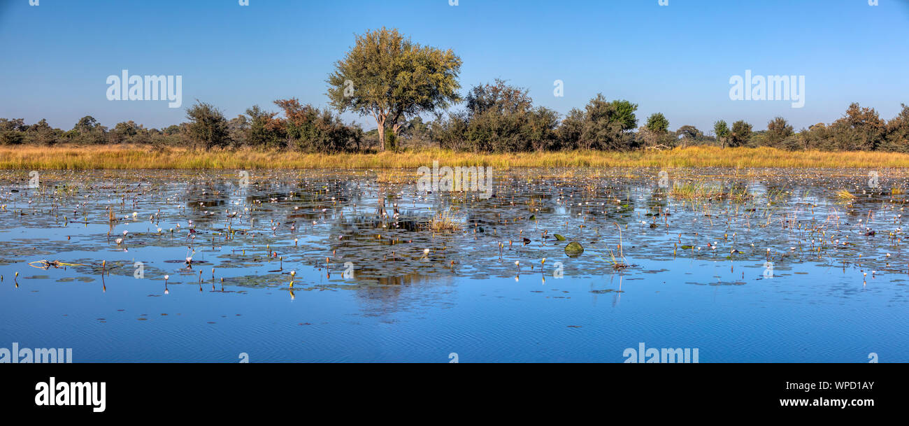 Typical beautiful african landscape, wild river in national park Bwabwata on Caprivi Strip with water lilies bloom in water. Namibia africa wilderness Stock Photo