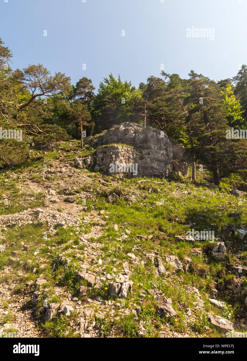 mountain scenery with limestone rocks, grass and trees bellow Tlsta hill in Velka Fatra mountains in Slovakia during springtime day with clear sky Stock Photo
