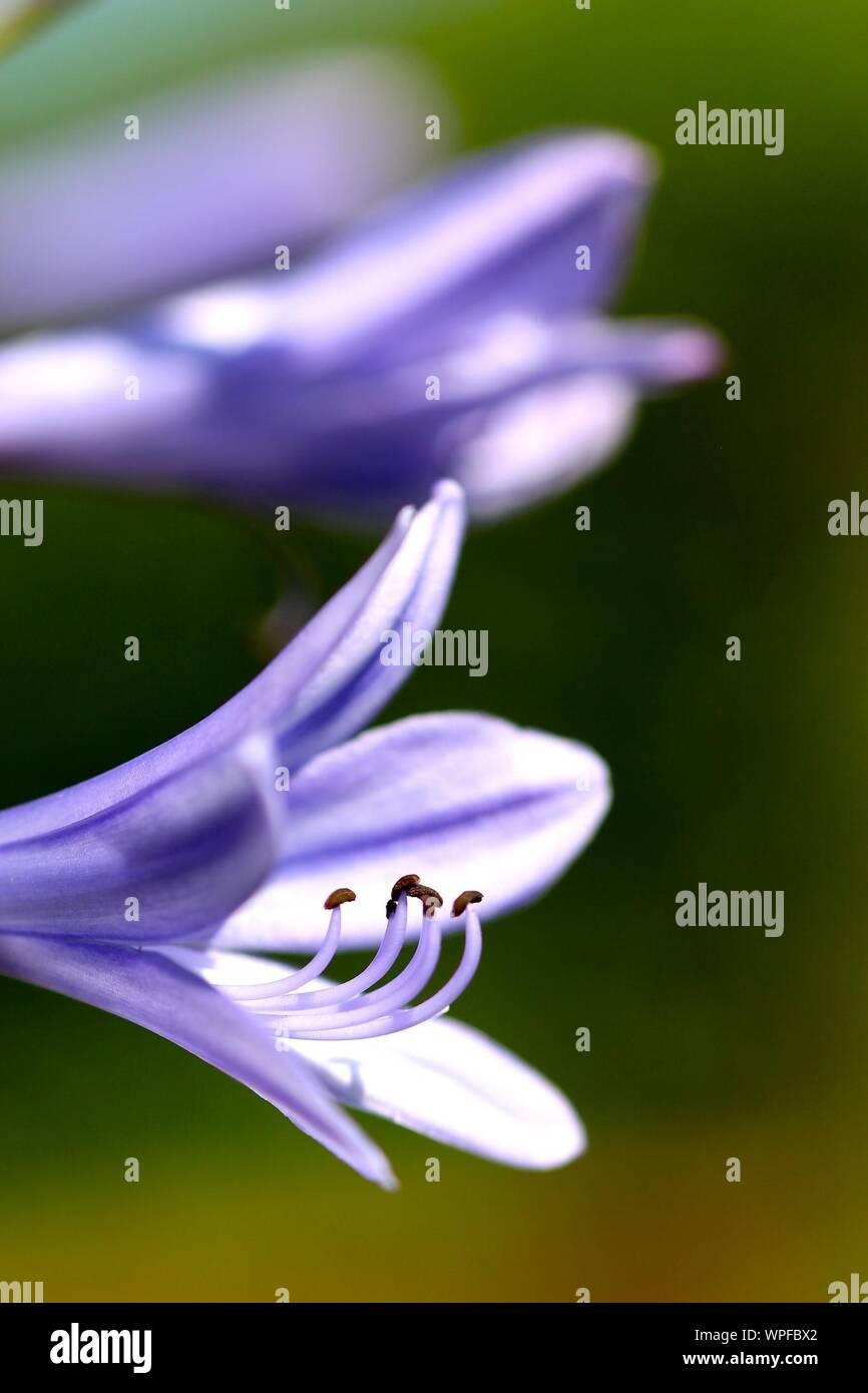 Close Up Image Of Beautiful Plants Stock Photo