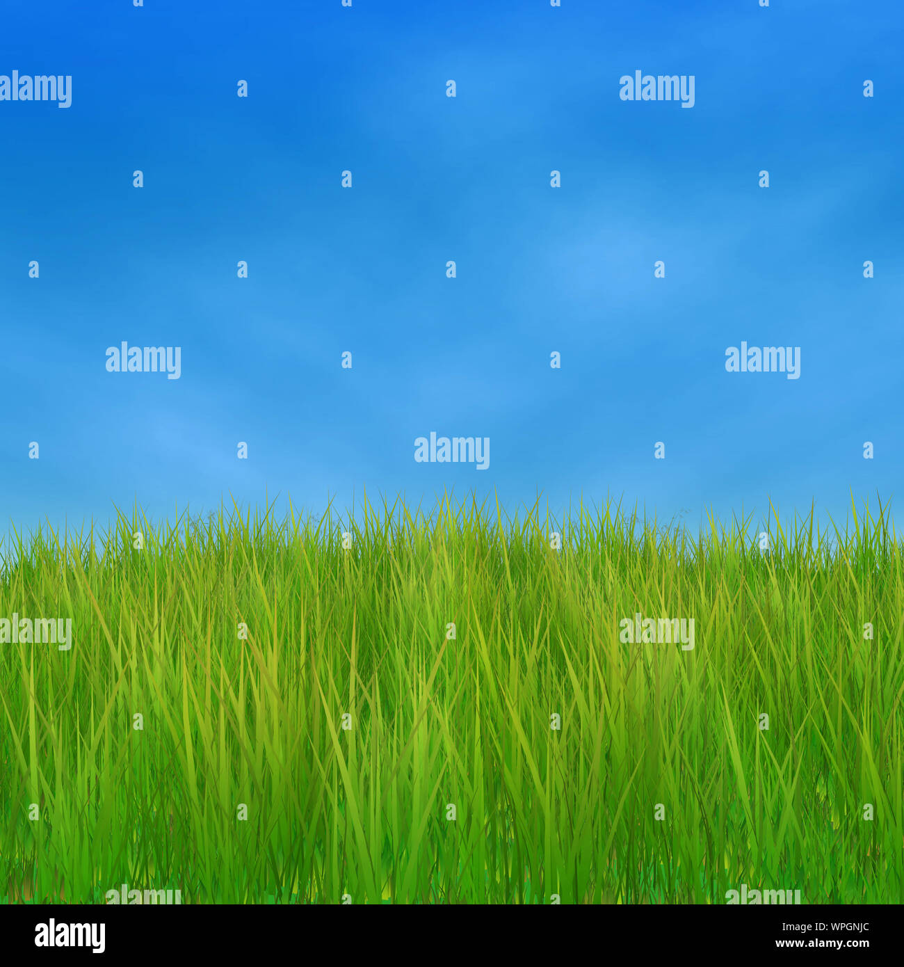 Summer nature background with 3d green grass and blue sky