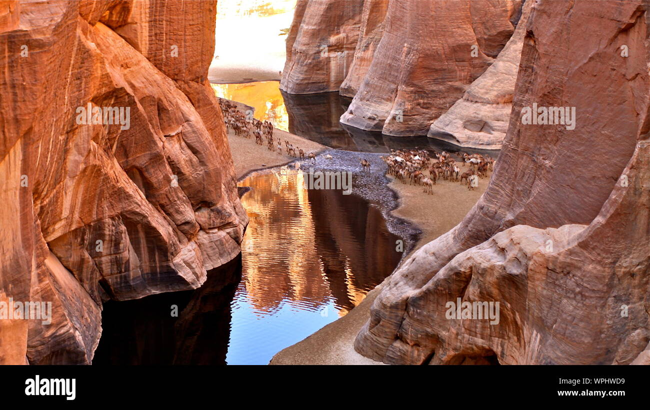 View Of Cattle Crossing River In Between  Ennedi Plateau In Chad Stock Photo