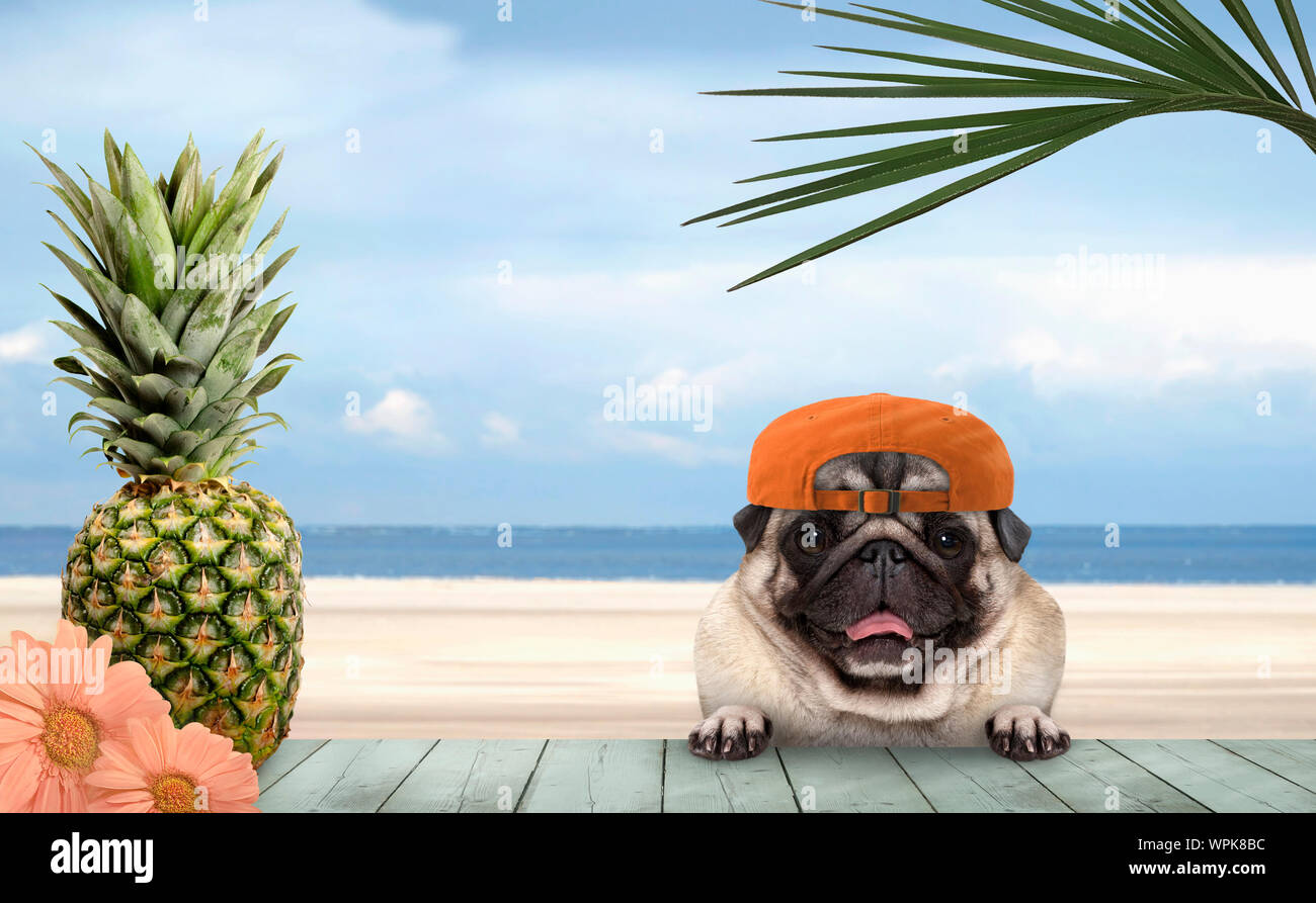 smiling tropical summer pug dog with orange cap, with paws on vintage green wooden table and sea and beach on background Stock Photo