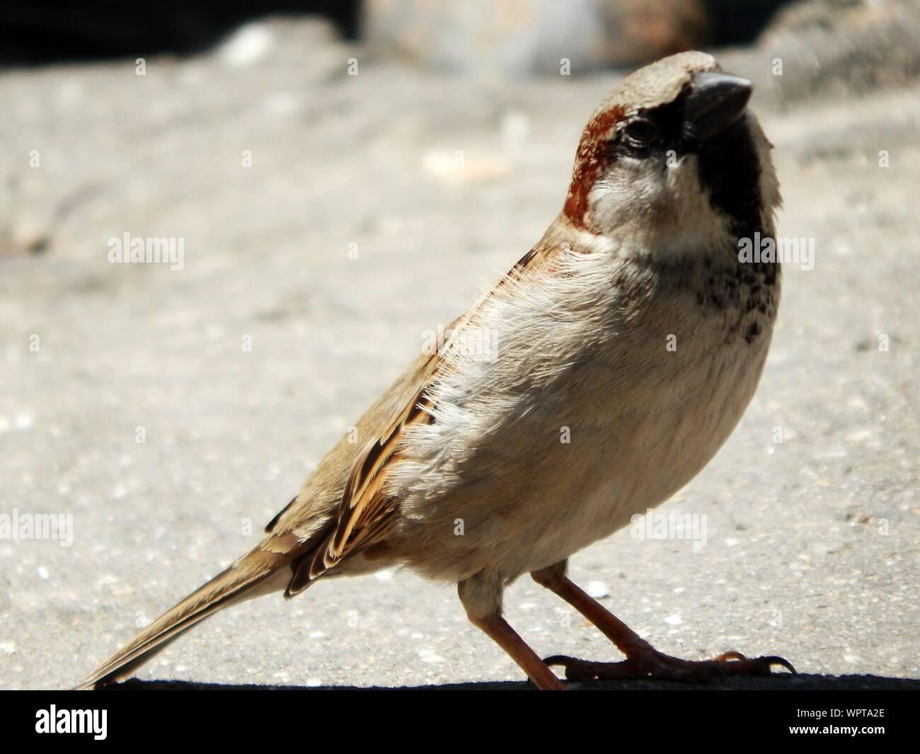 Close-up Of Bird Stock Photo