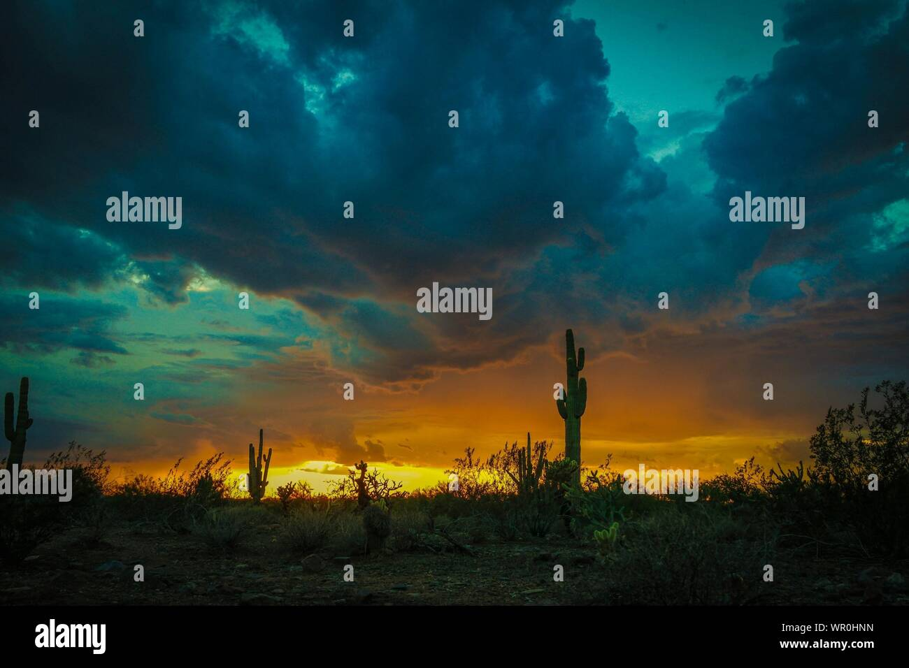Cactus Plants Growing In Desert Against Cloudy Sky During Sunset Stock Photo
