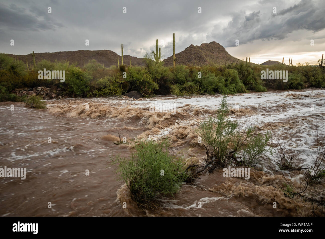 Flash flooding on a desert arroyo after a strong Monsoon Season thunderstorm in Organ Pipe Cactus National Monument, Pima County, Arizona, USA Stock Photo
