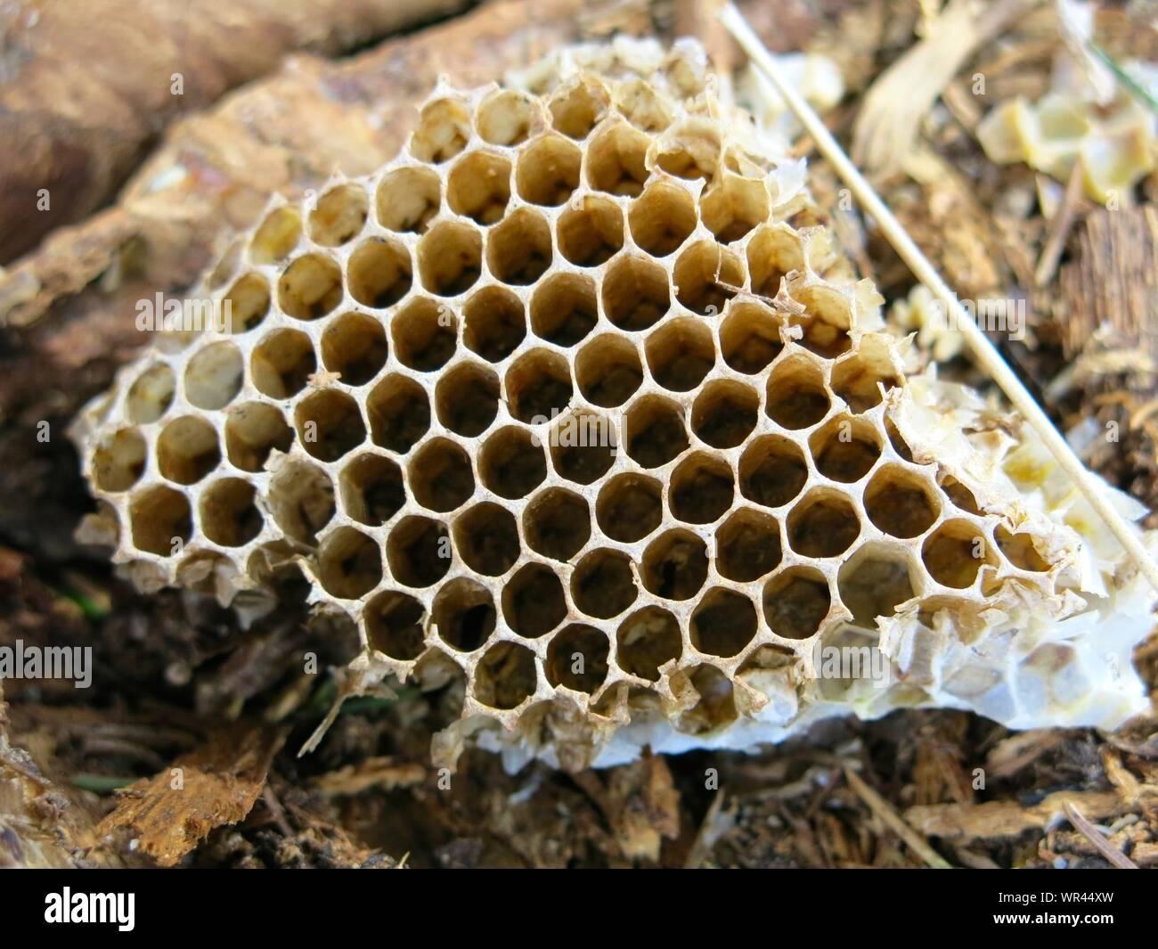 Close Up Of Broken Honeycomb Stock Photo Alamy
