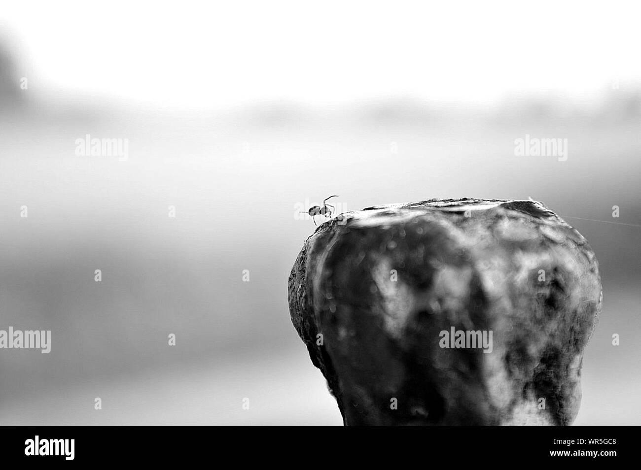Macro Shot Of Ant Crawling On Rock Stock Photo
