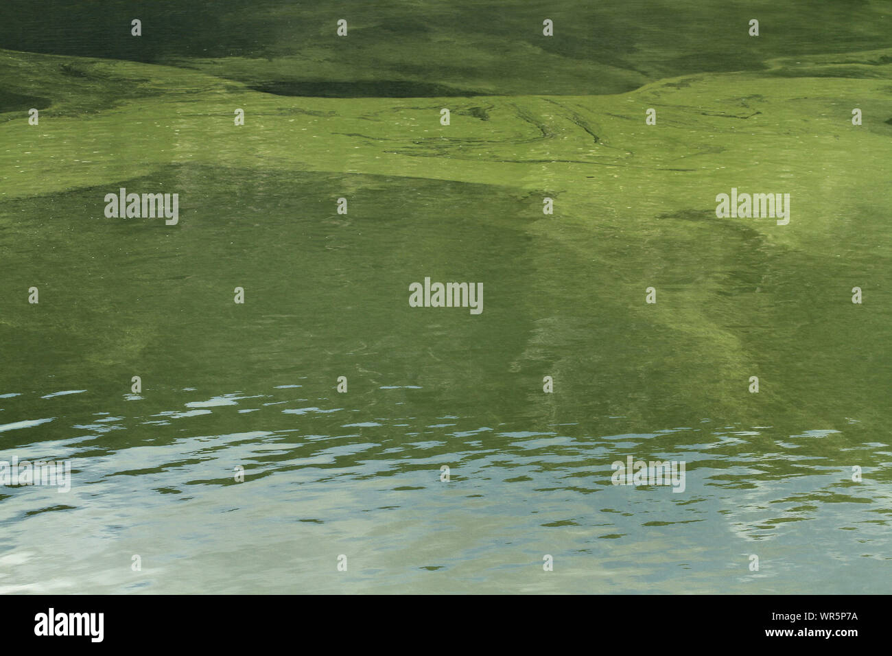 Dirty water, Pongolapoort Dam, South Africa Stock Photo