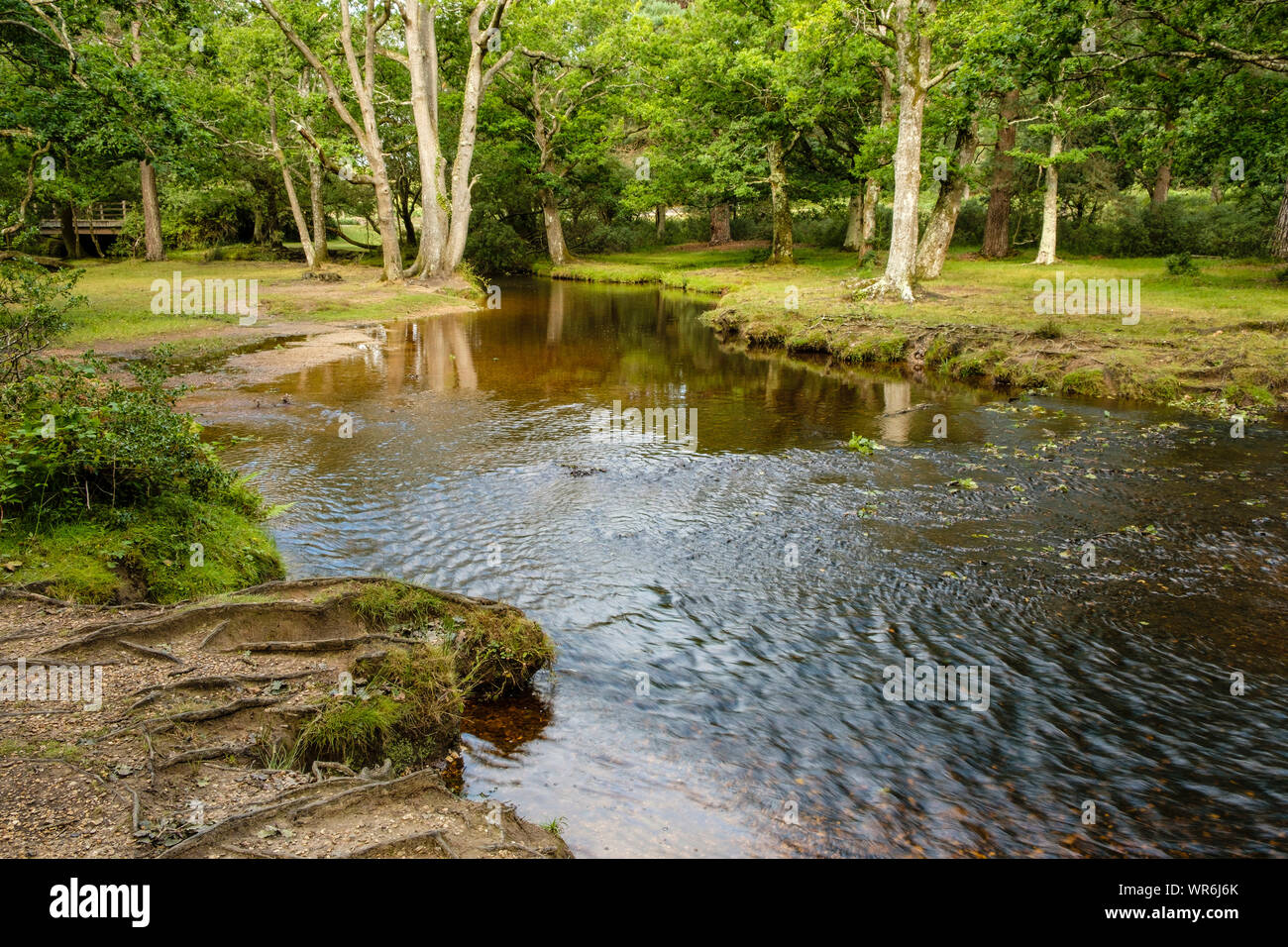 New Forest, Ober Water River at Puttles Bridge from Rhinefield Road, Hampshire, England, UK. Stock Photo