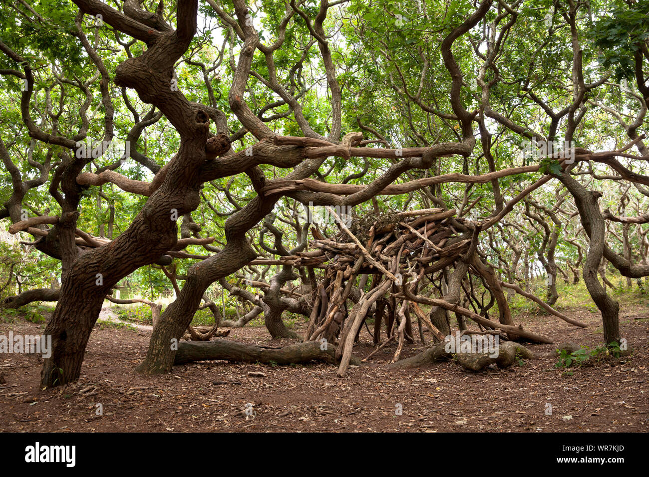 simple shelter built with tree trunks and branches in the nature reserve de Manteling near Domburg on Walcheren, Zeeland, Netherlands.  einfacher Unte Stock Photo