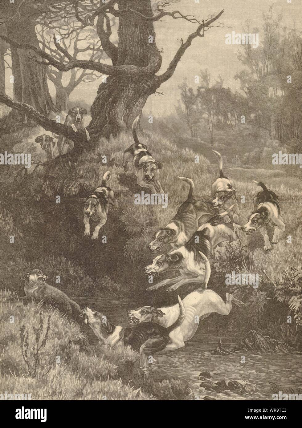 Stealing away Foxes 1872 antique ILN full page print Hunting