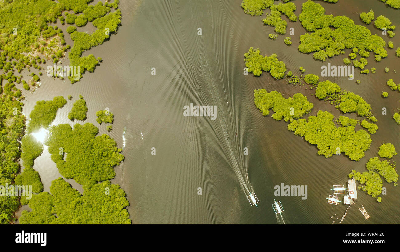 Boats sails in the mangroves among green trees from above. Mangrove jungles, trees, river. Mangrove landscape Stock Photo