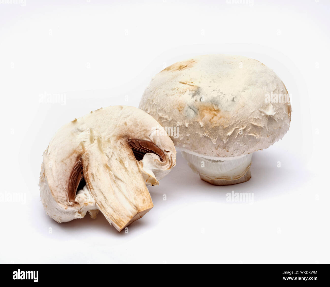 Button Mushrooms, whole and sliced in half on a white background Stock Photo
