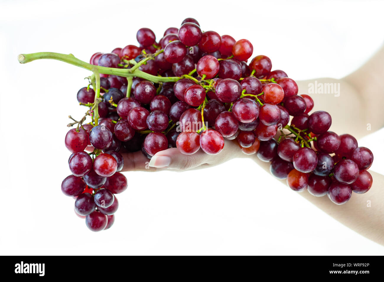 Ripe red grape bunch in lady hand at white blackground Stock Photo