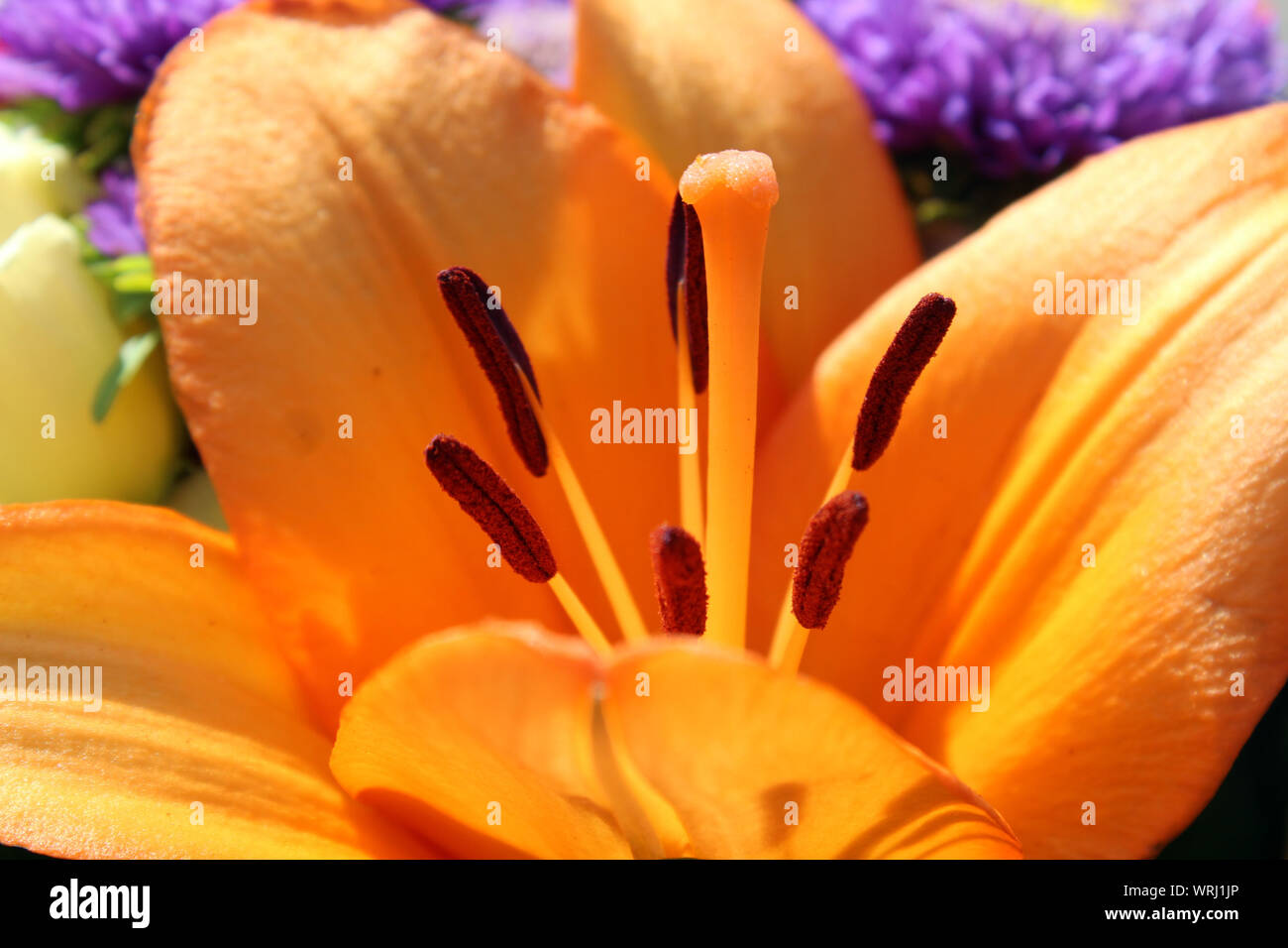 Lily pistil in a bouquet close up Stock Photo