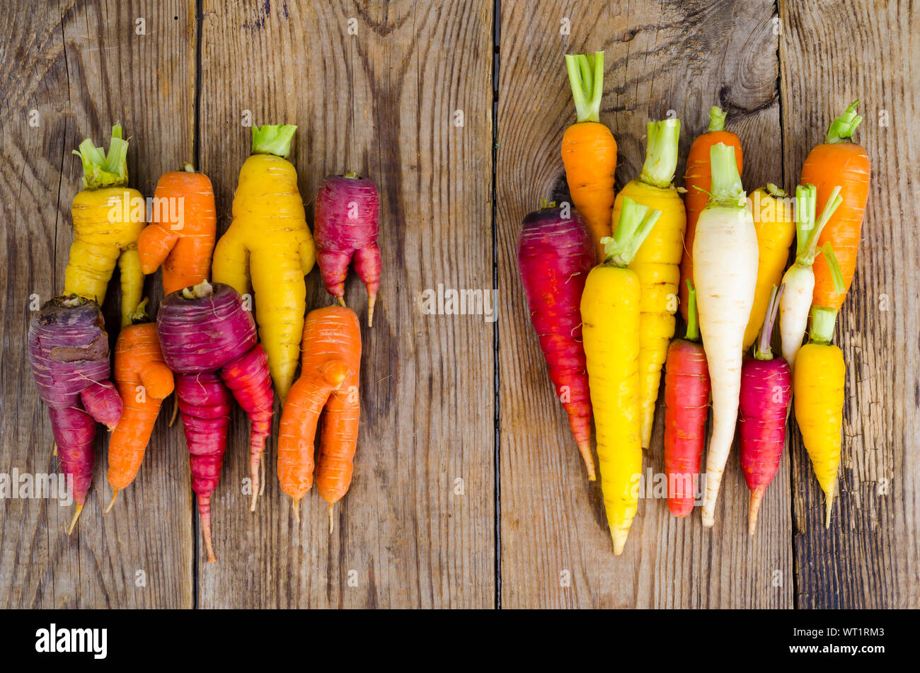 Ugly, deformed fresh organic carrots different color. Studio Photo Stock Photo