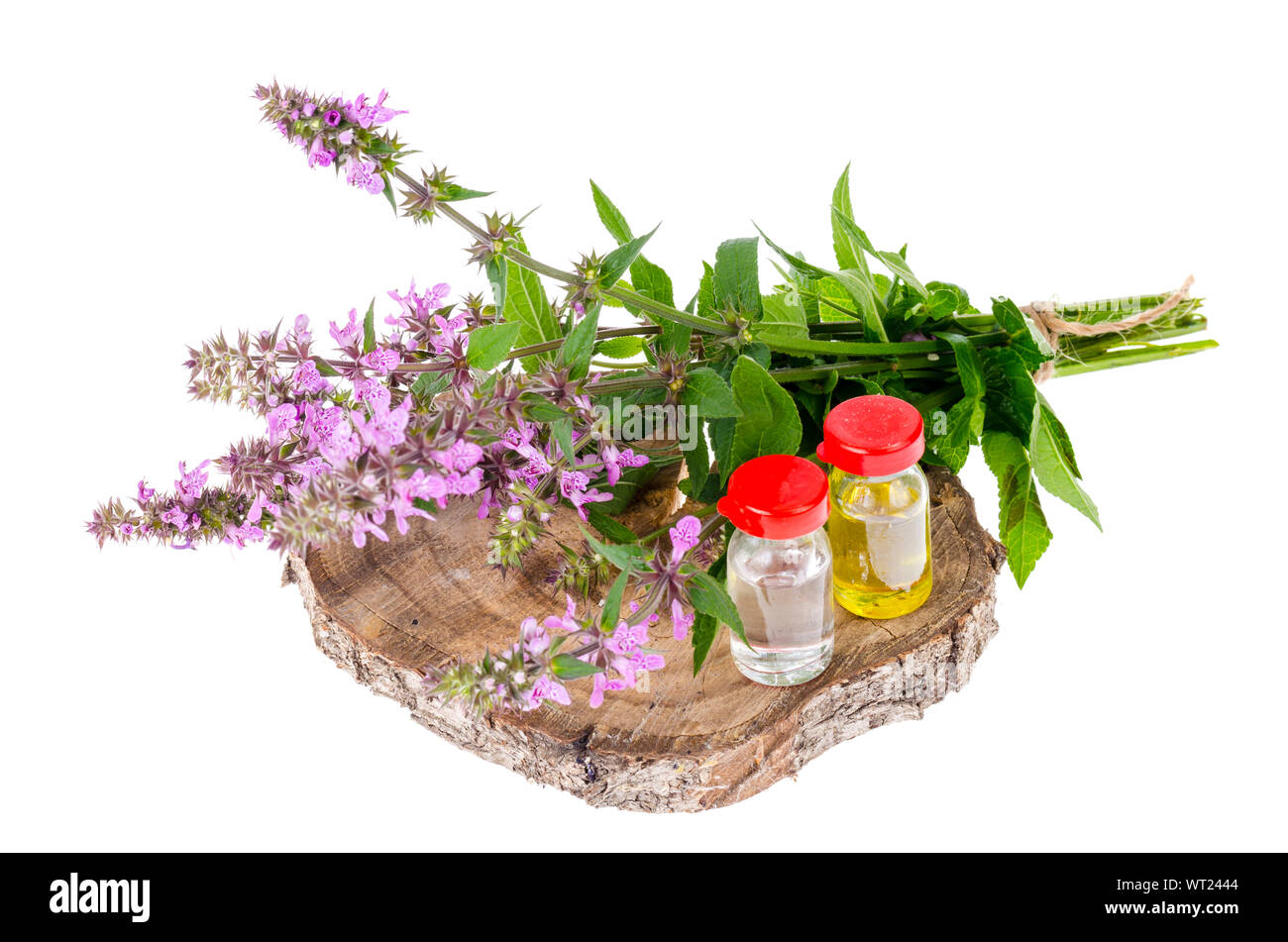 Pharmaceutical tincture, extract of wild herbs, medicinal flowers in medical bottles. Studio Photo Stock Photo
