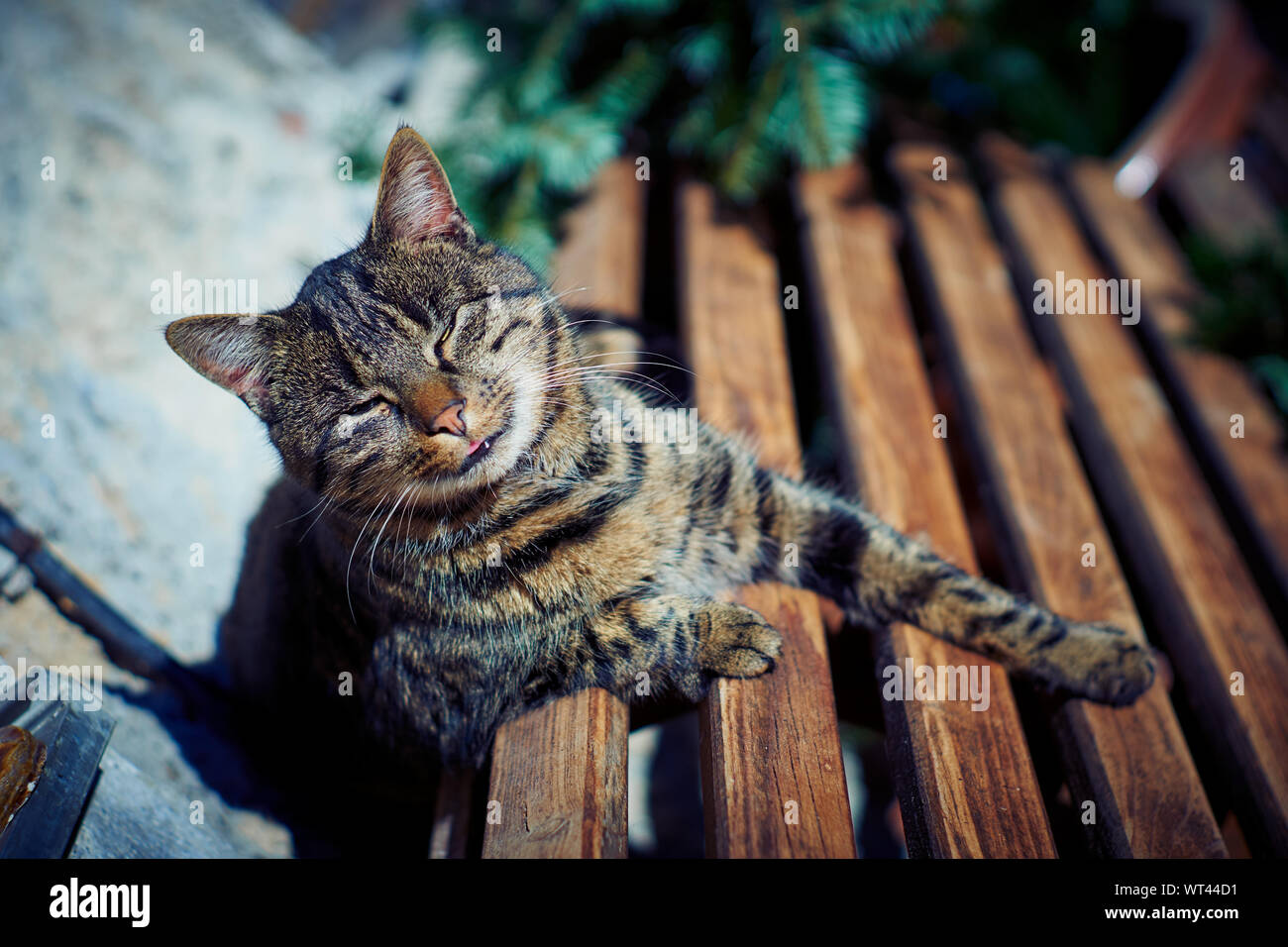 A gray cat sits on a bench Stock Photo
