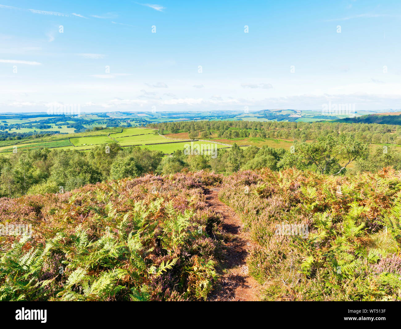 A narrow footpath between flowering heather leads off Birchen Edge and across Derbyshire Stock Photo