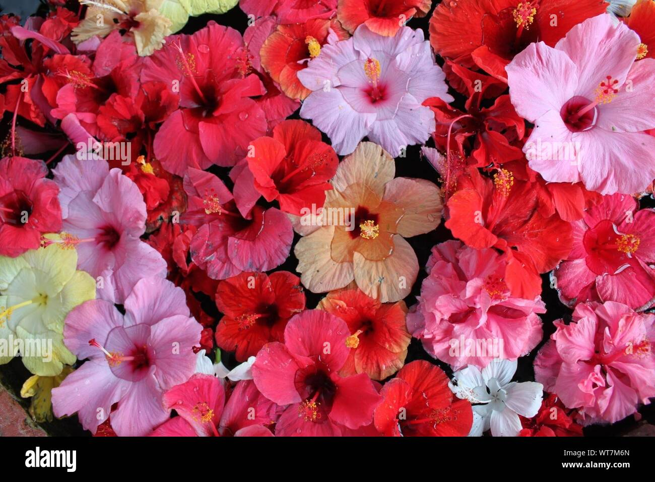 Close Up Image Of Beautiful Plants Stock Photo