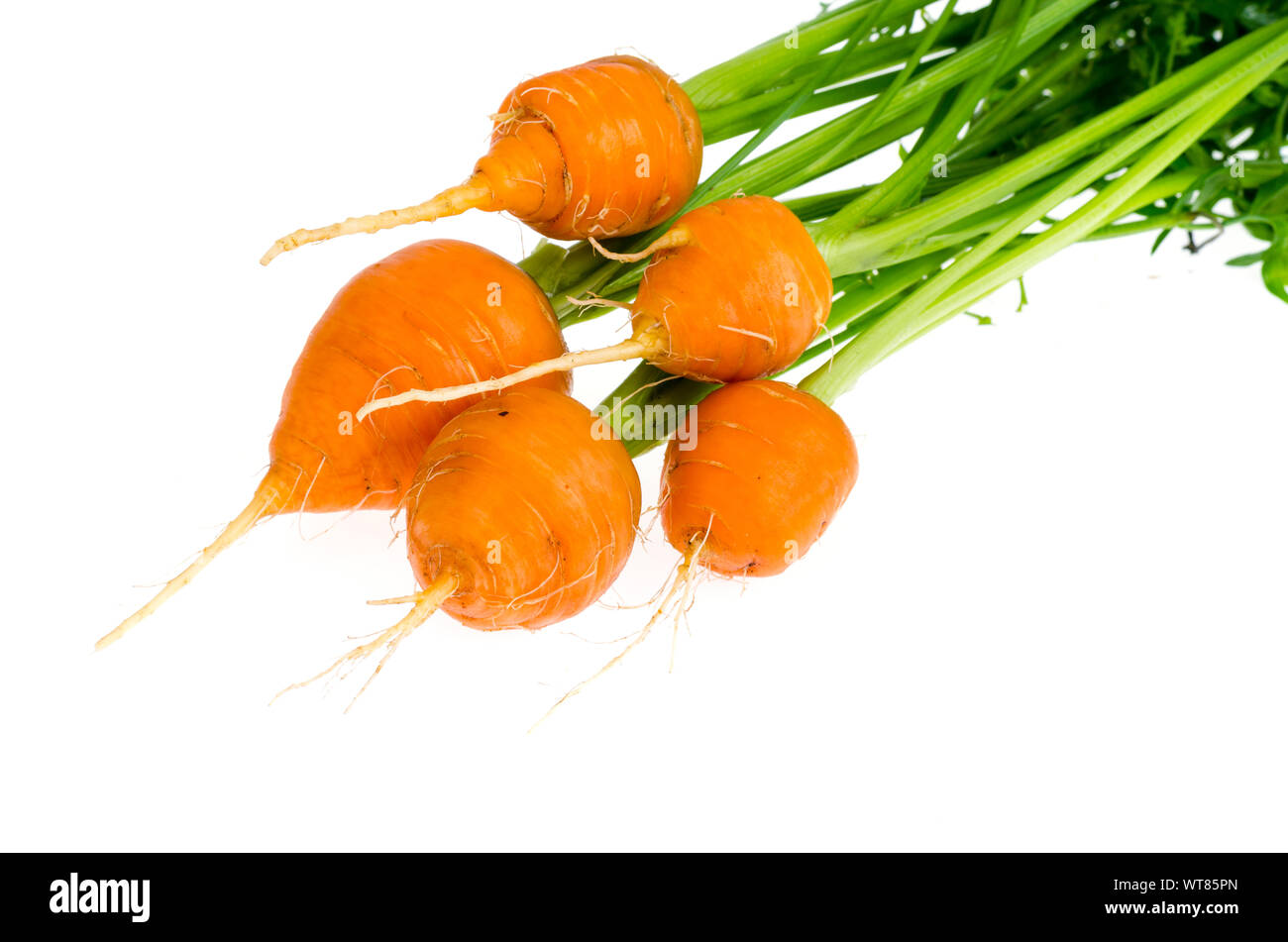 Just harvested Round romeo carrots, isolated on white background. Studio Photo Stock Photo
