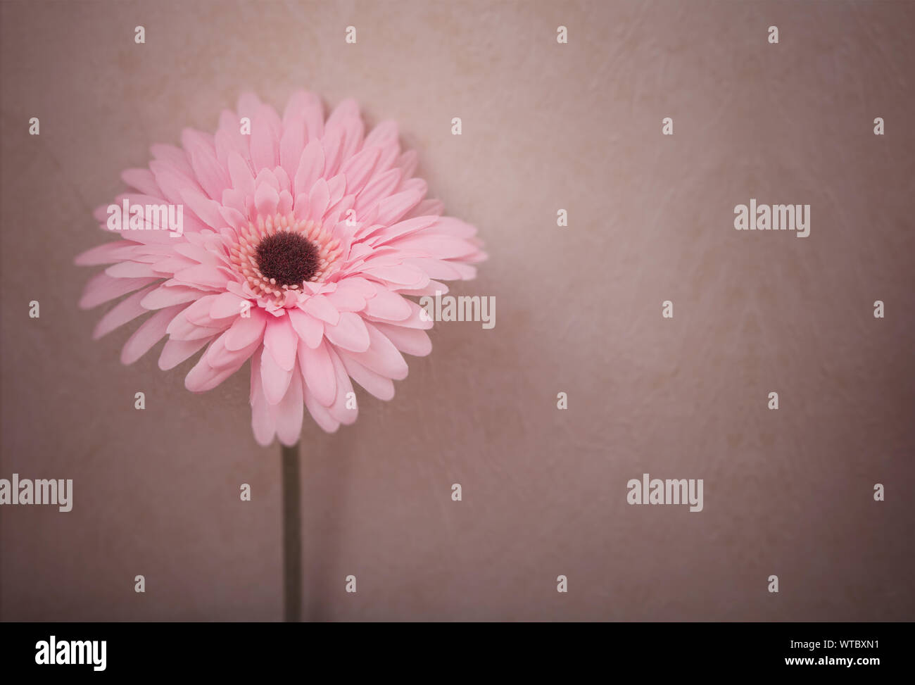 Beautiful pink flowers with copy space. Stock Photo