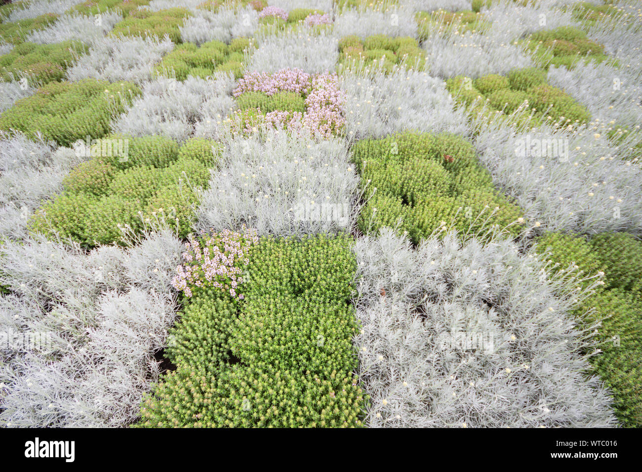 Garden decoration with grass planting, green grass or green plant field in garden in spring or summer nature background. Stock Photo