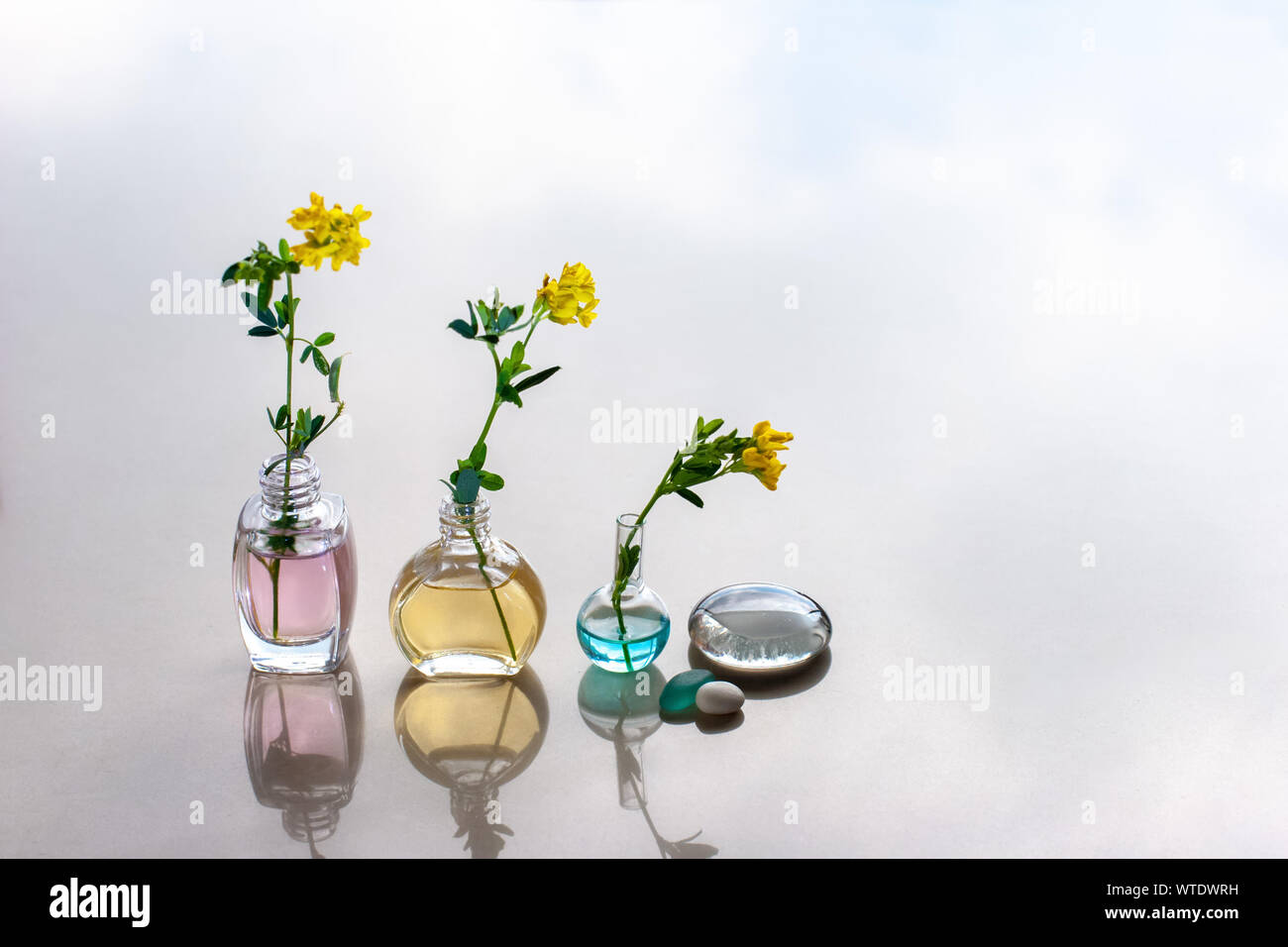 Three bottles of aromatic oils of different heights stand in line with a different color of oils. In the bottle stuck flowers. Reflections. Stock Photo