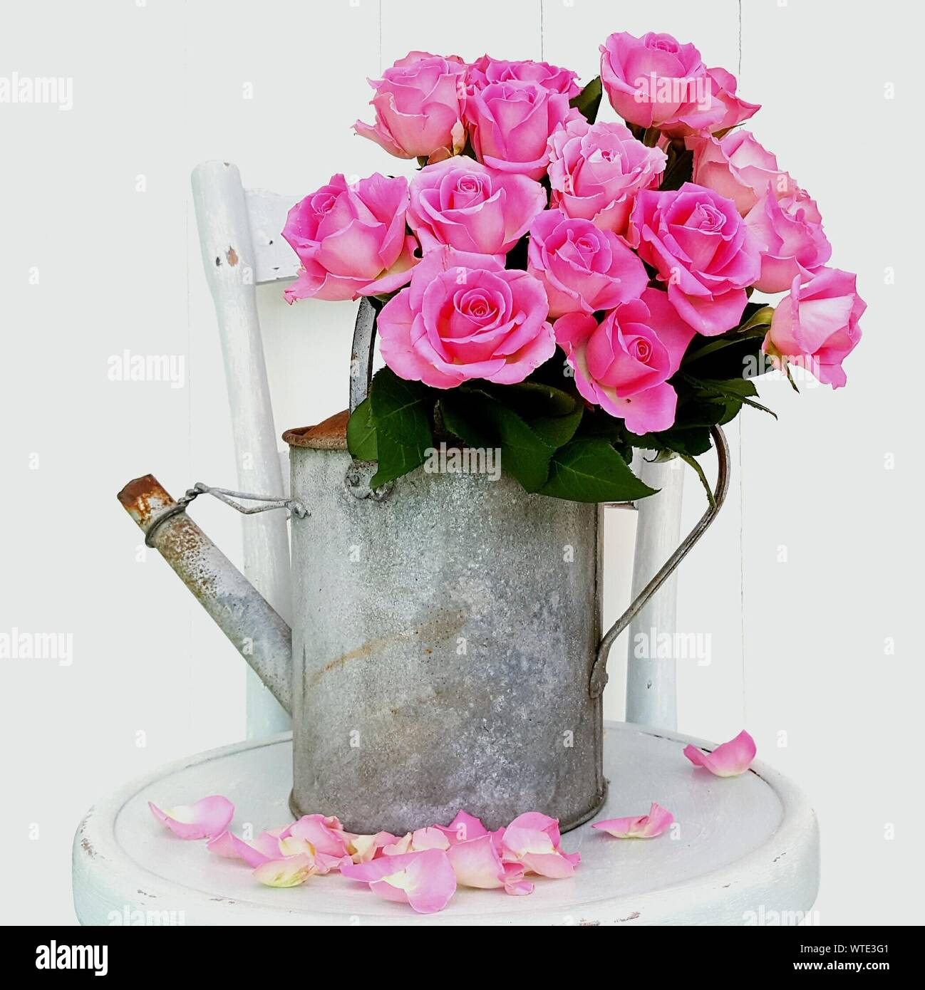 Close-up Of Pink Roses In Watering Can Against White Background Stock Photo