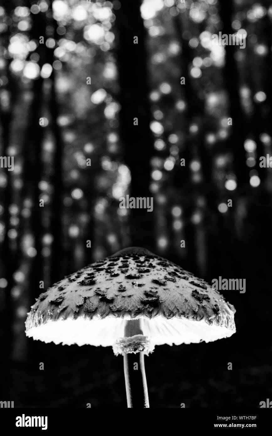 Magic mushroom in the woods full of energy emitting light Stock Photo
