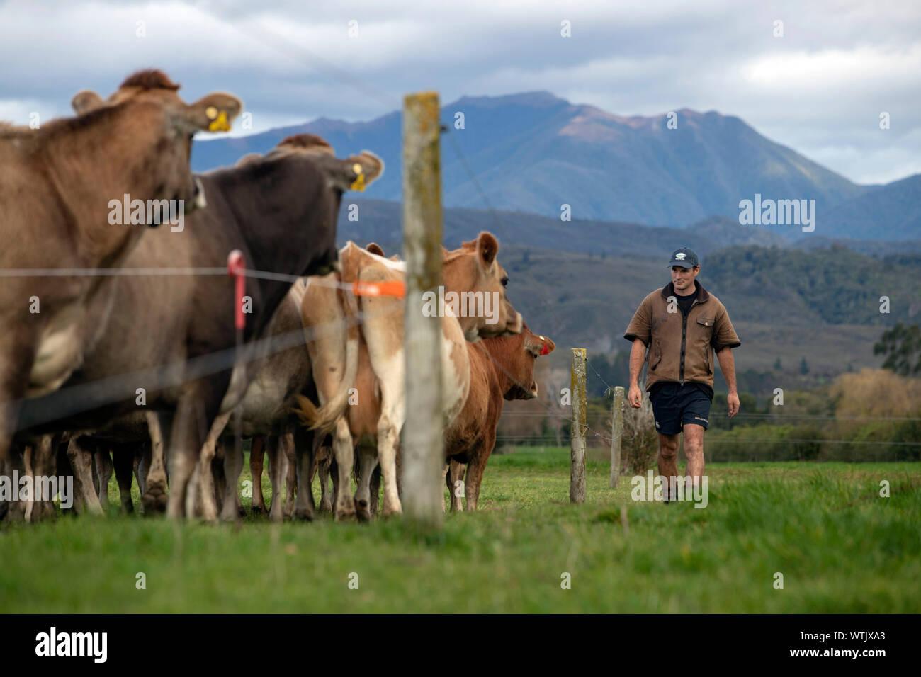 Picture by Tim Cuff - 13 June 2019 - Dairy Farmer magazine: Stock Photo