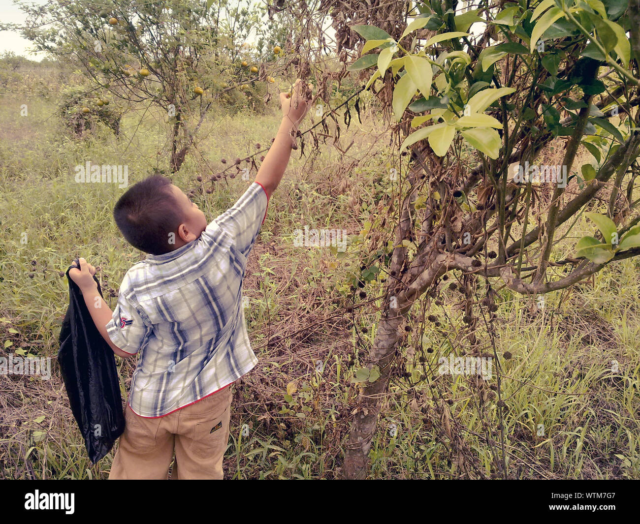 Eye Level Shot Of Boy Holding Plant Stock Photo